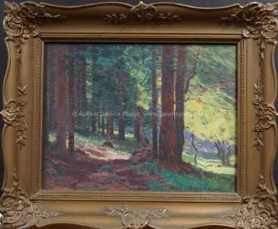 Roman Havelka - Prosluněný les