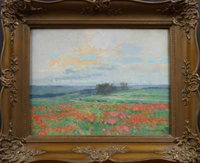 Roman Havelka - Makové pole