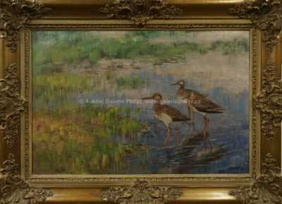 Stanislav Lolek - Vodní ptáci