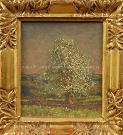 Jan Honsa - Rozkvetlý strom