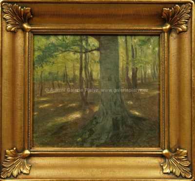 Alois Kalvoda - Slunce v lese