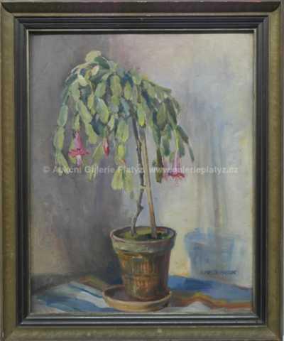Anežka Medunová - Vánoční kaktus