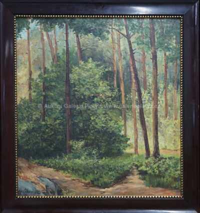 Průhled lesem