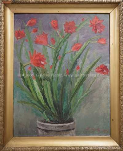 Jan B. Minařík - Vánoční kaktus