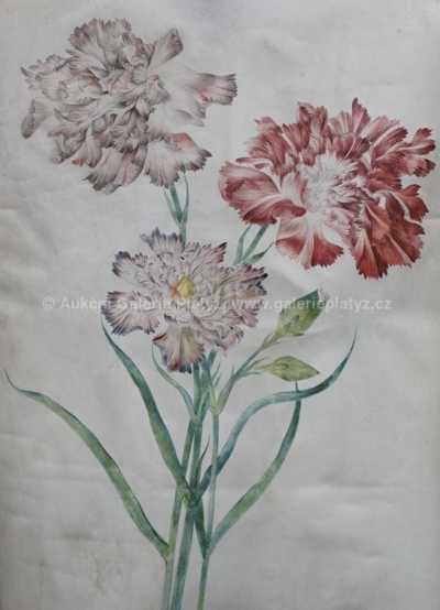 Nesignováno - Květiny
