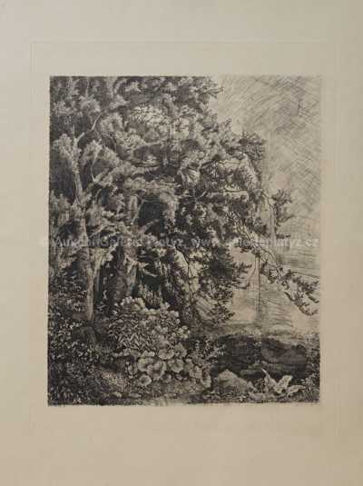 Julius Mařák - Na pokraji pralesní divočiny