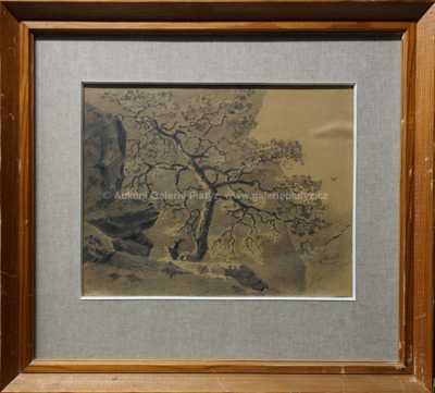 Pepa (Josefína) Mařáková - Strom na skále
