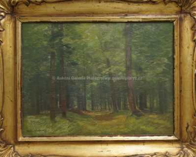 Roman Havelka - Průhled lesem
