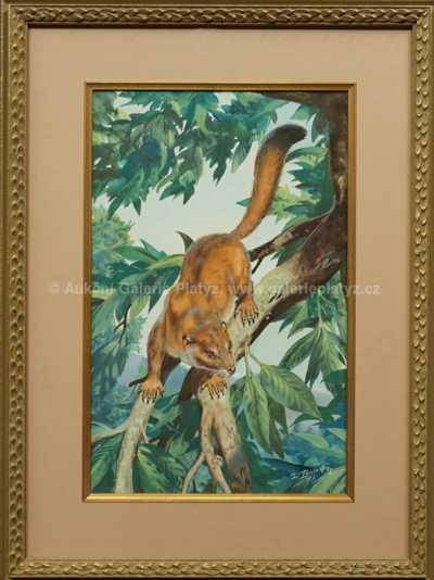 Plesiadapis gidleyi