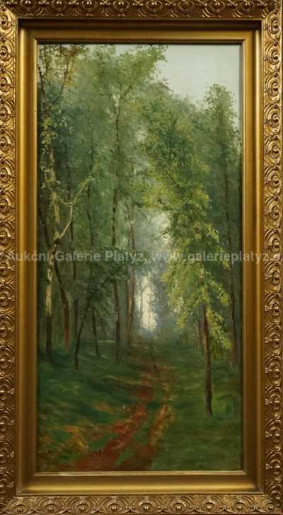 Nesignováno - Průhled lesem