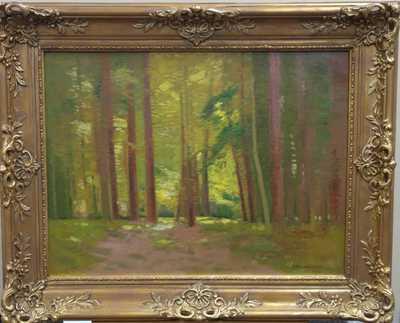 Roman Havelka - Slunce v lese